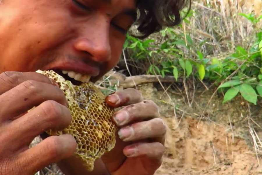 Safe to Eat Raw Honeycomb? - Primitive Natural Food