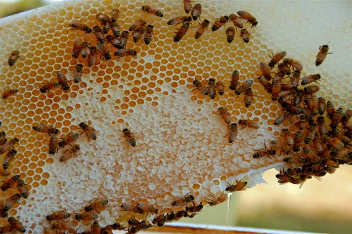Honey bees and comb